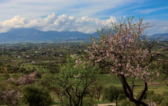 Mandelblüte an der Algarve